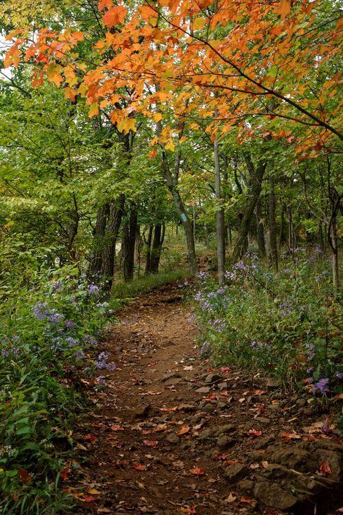 New England National Scenic Trail (Photo:Xiomáro)