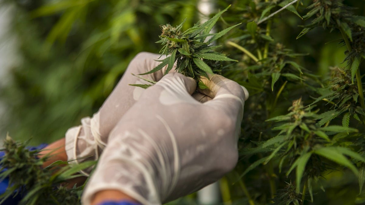 New Study Finds College Students Smoking More Marijuana, Drinking Less