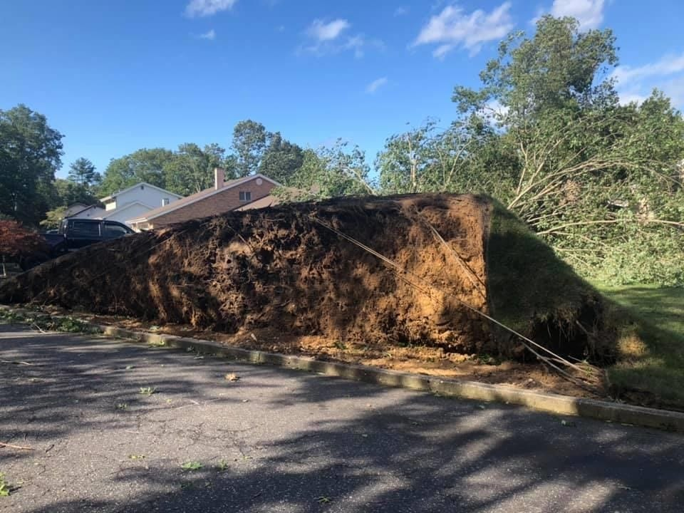 Farmingville | Large tree in front of house uprooted | Taylor m