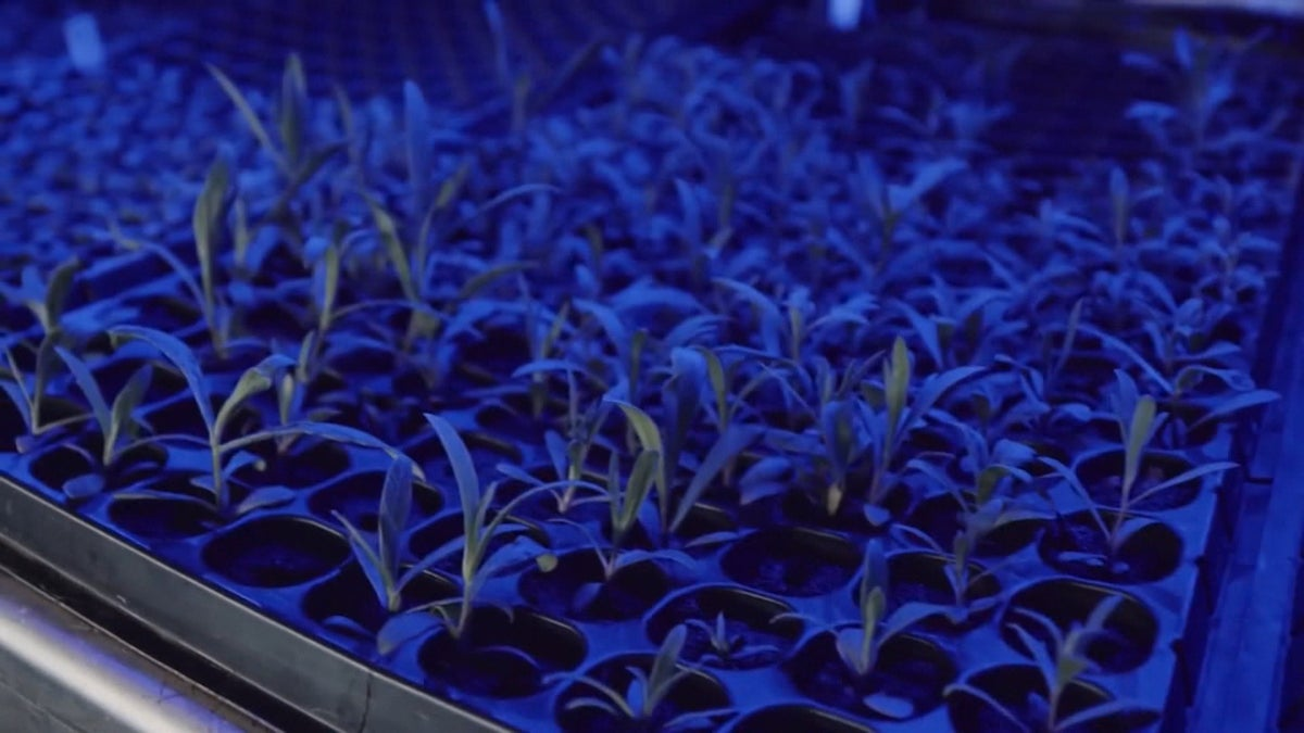 Freight Farms Raises $15 Million to Grow Crops in Shipping Containers