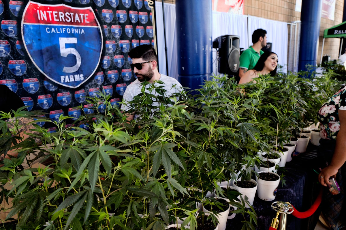 This Oct. 20, 2018, file photo shows marijuana clone plants displayed for sale by Interstate 5 Farms at the cannabis-themed Kushstock Festival at Adelanto, Calif. The leading cannabis industry group in California announced Tuesday, Jan. 19, 2021, it had reached an agreement with a state credit union that will provide access to checking and other banking services for marijuana companies, ending what had been a longstanding obstacle for many businesses. (AP Photo/Richard Vogel, File)