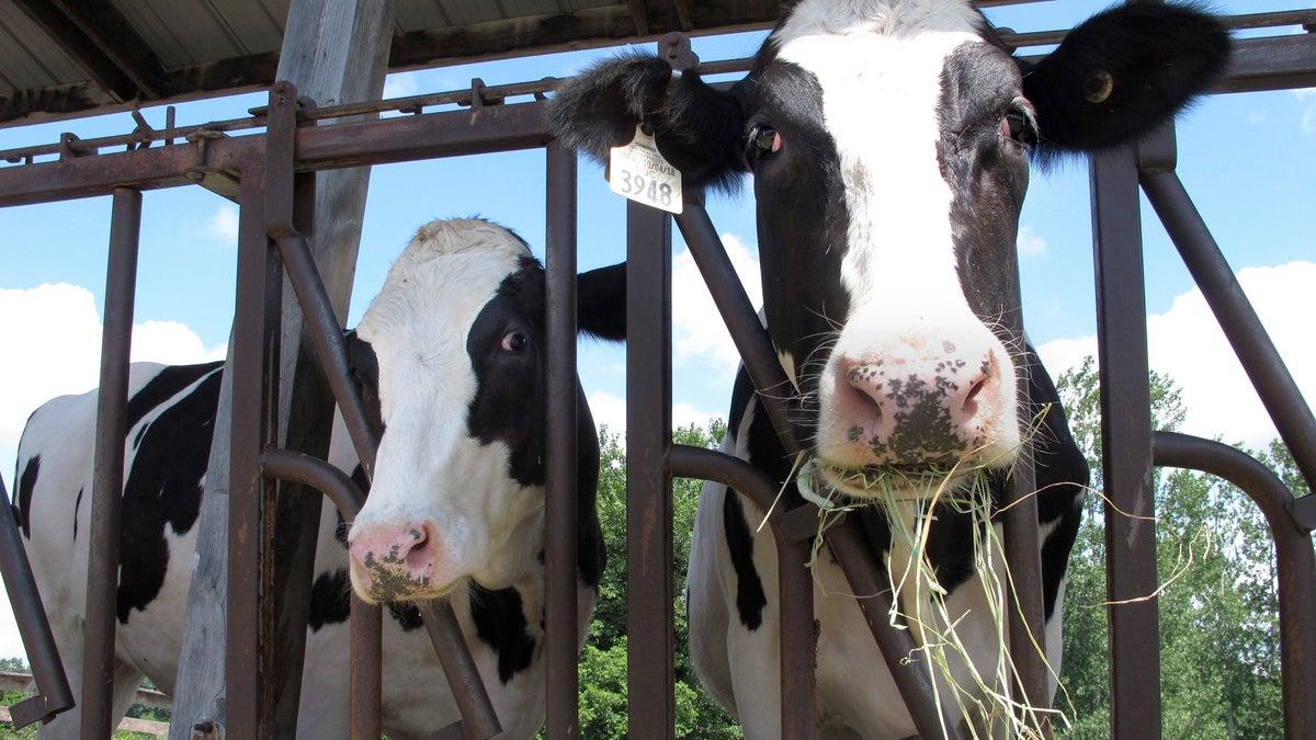 Iconic Got Milk? Ad Campaign Returns Amid Surging Sales