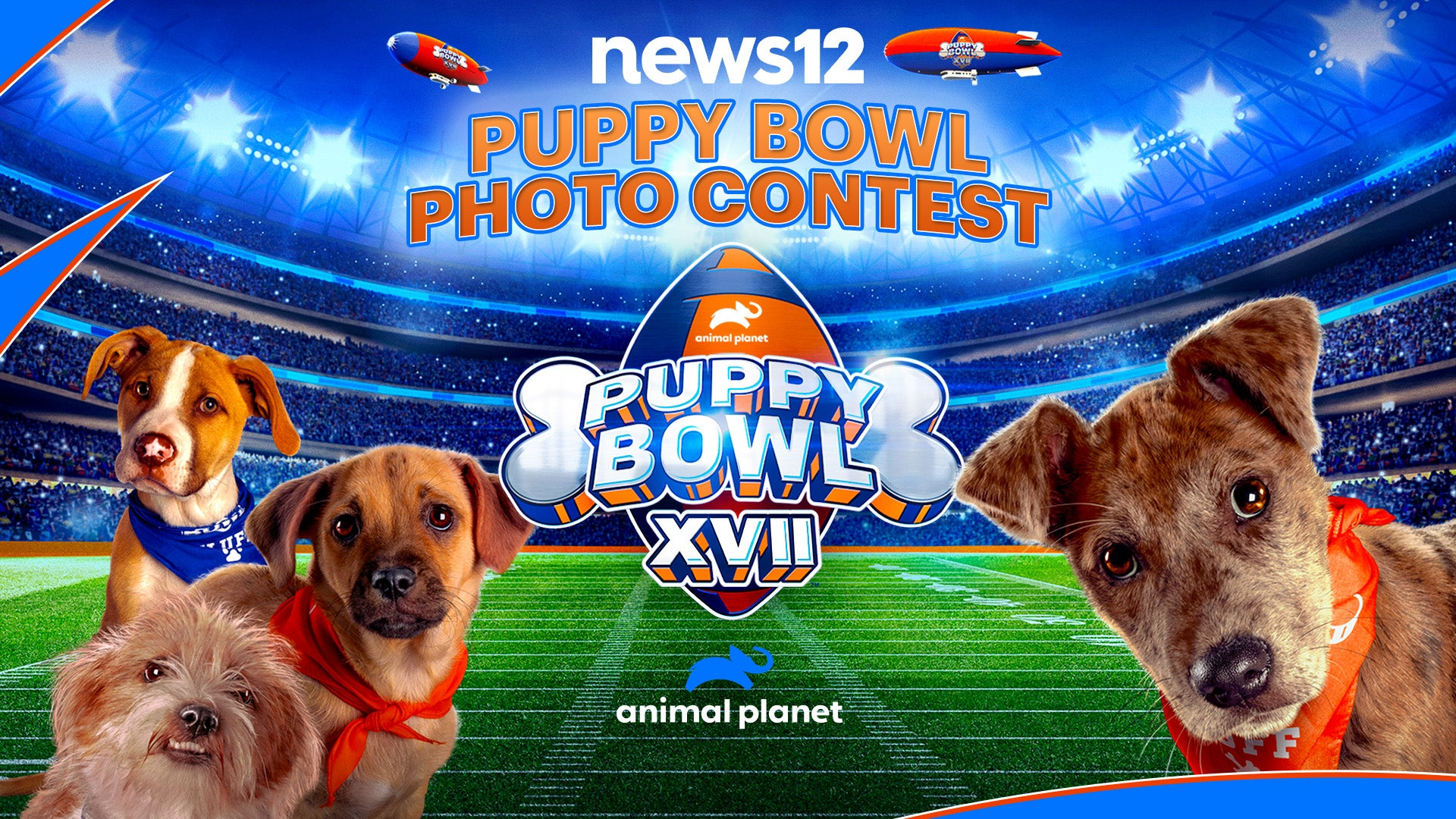 News 12 Puppy Bowl Photo Contest 2021