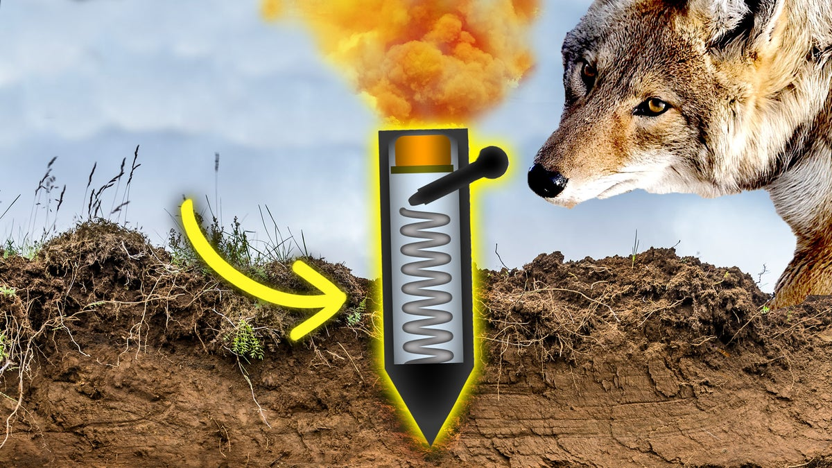 The U.S. Campaign To Bomb Wildlife With Cyanide